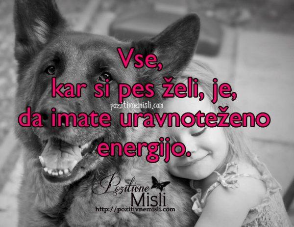 Vse, kar si pes želi, je, da imate uravnoteženo energijo.