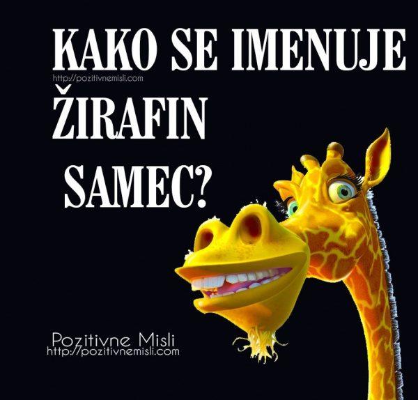 Kako se imenuje žirafin samec?