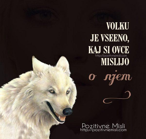 Volku je vseeno, kaj si ovce mislijo o njem