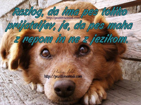 Razlog, da ima pes toliko prijateljev, je, da pes maha z repom in ne z jezikom