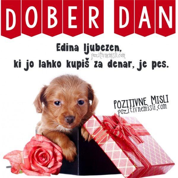 Edina ljubezen, ki jo lahko kupiš za denar, je pes