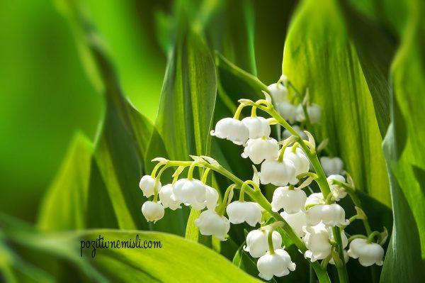 Šmarnice  - pomlad