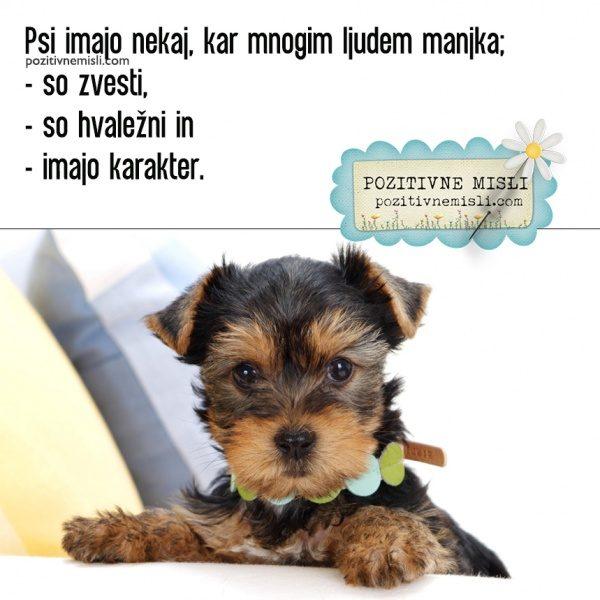 Psi imajo nekaj, kar mnogim ljudem manjka; so zvesti, so hvaležni in  ...