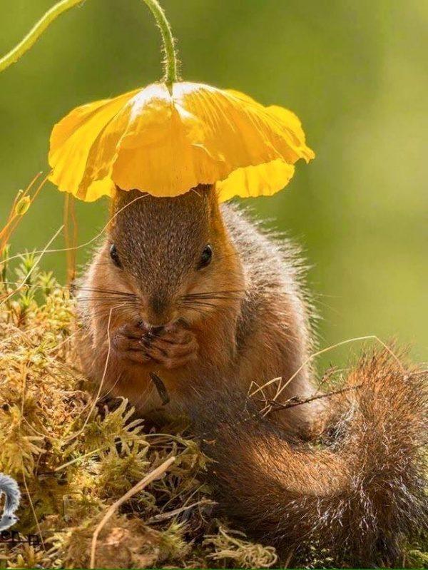 Veverica pomlad