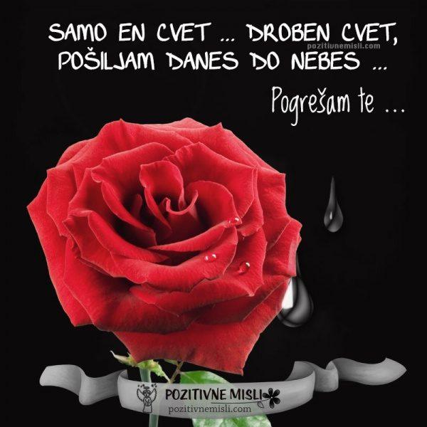 Samo en cvet ... droben cvet pošiljam danes do nebes