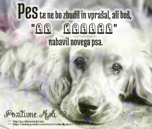 Slovo od hišnega ljubljenčka