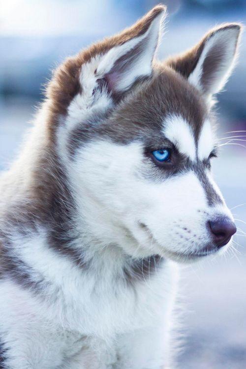čudoviti pes