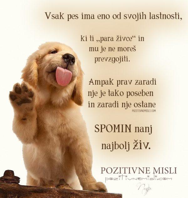 Vsak pes ima eno od tistih lastnosti, ki ti ...