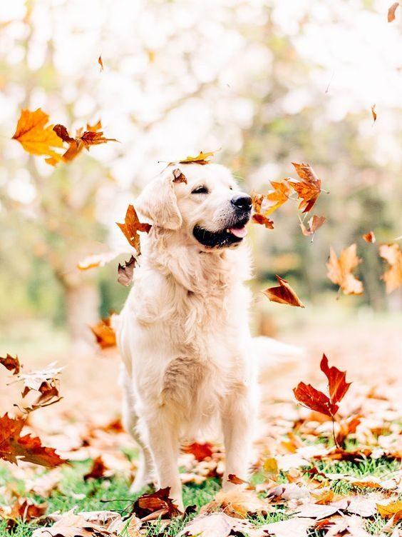 Kuža - uživanje v jeseni