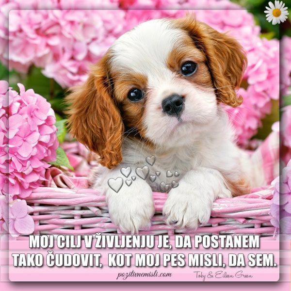 PES TERAPEVT - Moj cilj v življenju je ...