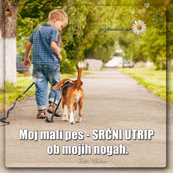 PES TERAPEVT - Moj mali pes ...