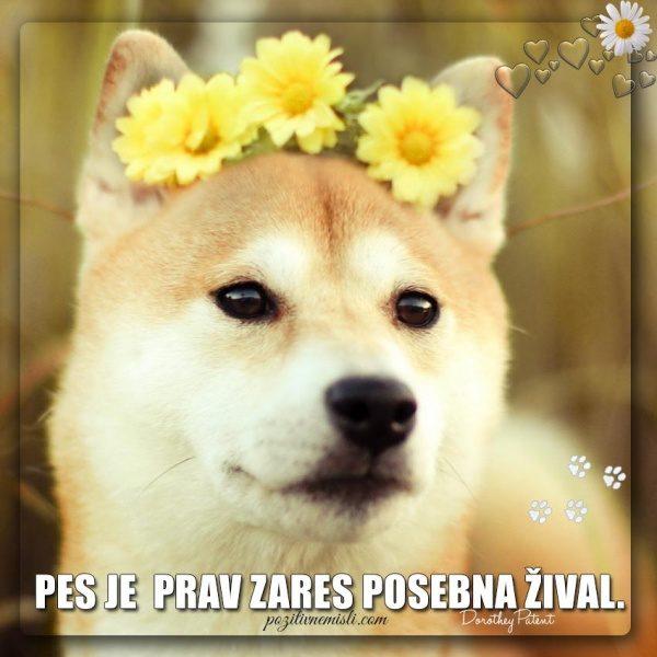 PES TERAPEVT - Pes je  prav zare