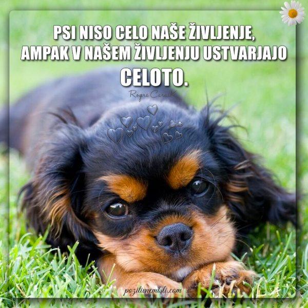 PES TERAPEVT - Psi niso celo naše življenje