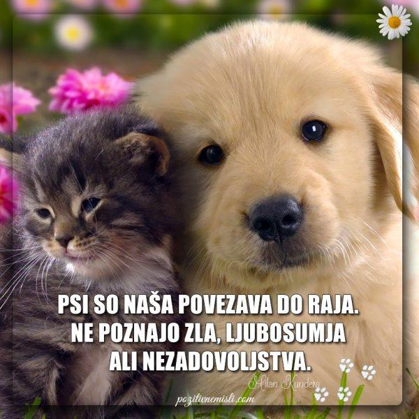 PES TERAPEVT - Psi so naša povezava ...