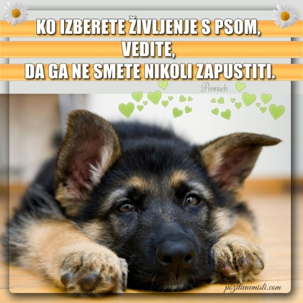 Ko izberete življenje s psom ...