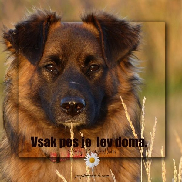 Vsak pes  je  lev doma