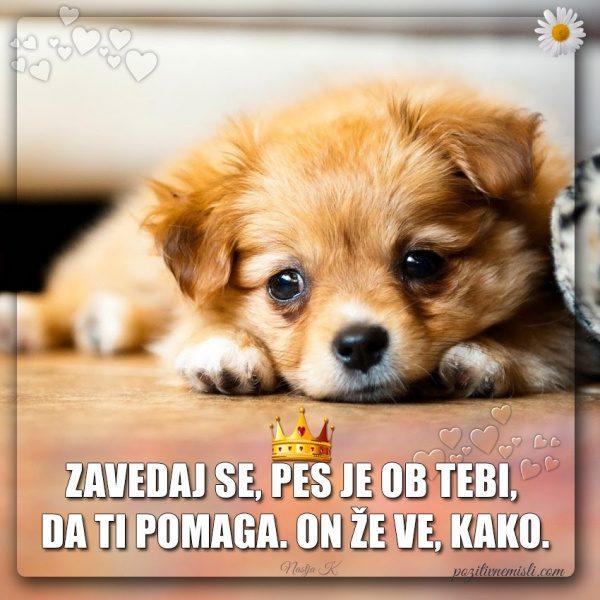 PES TERAPEVT - Zavedaj se, pes je ob tebi