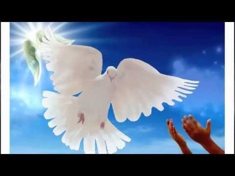 POLETI GOLOBICA - video