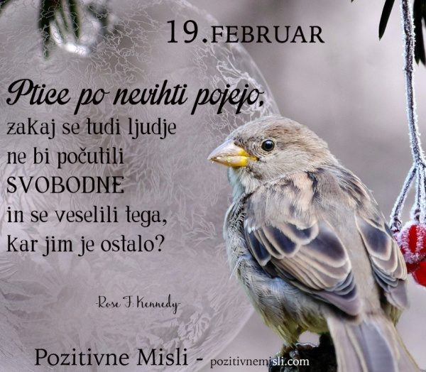 19. FEBRUAR - 365 modrih misli - Ptice po nevihti pojejo