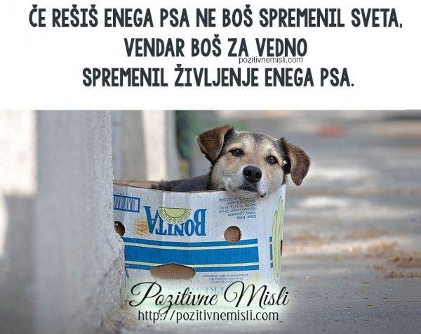 Če rešiš enega psa ne boš spremenil sveta,  vendar boš za vedno  spremenil