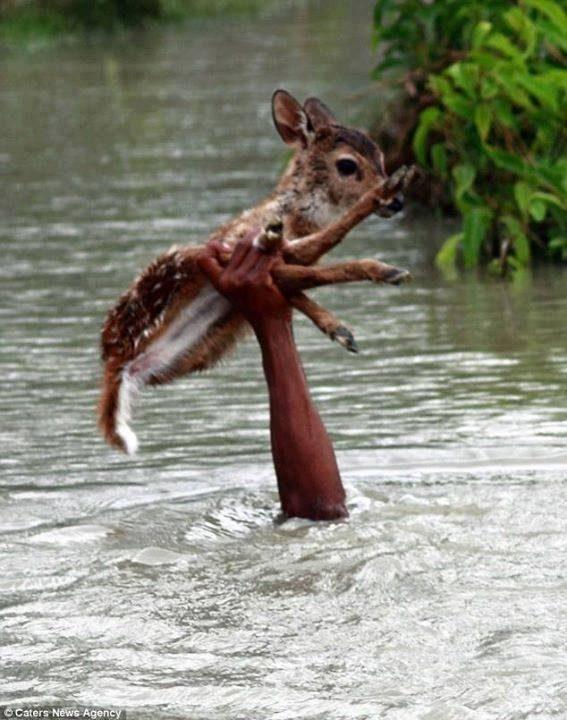 Poplave - pomoč srni