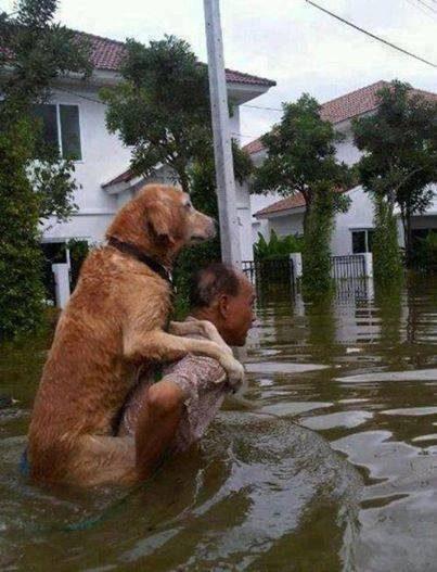 Pomoč nemočnim živalim