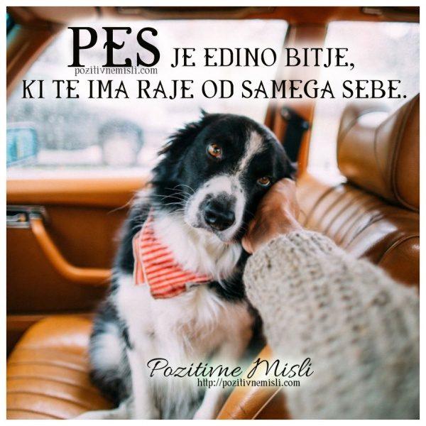 Pes je edino bitje, ki te ima raje od samega sebe.