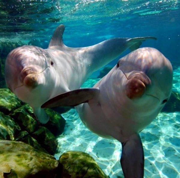 Delfini v morju
