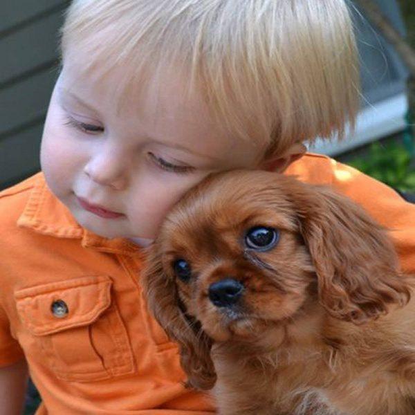 Pes in otrok ljubezen