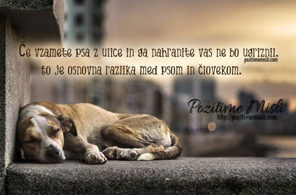 Če vzamete psa z ulice in ga nahranite vas ne bo ugriznil. To je osnovna ...