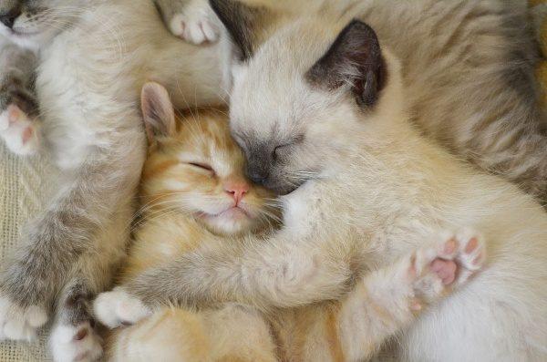 Mačke  -  mačja družina
