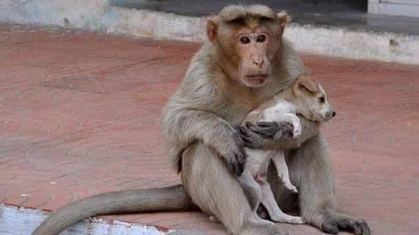 Opica in pes prijateljstvo