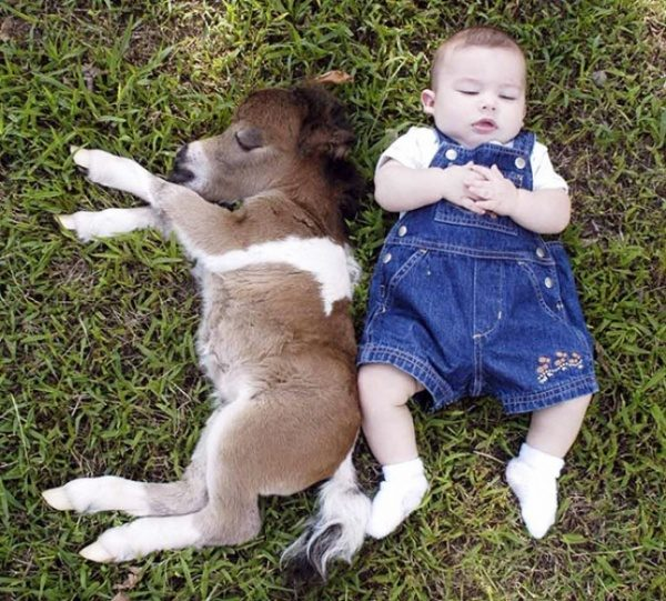Konjiček in otrok