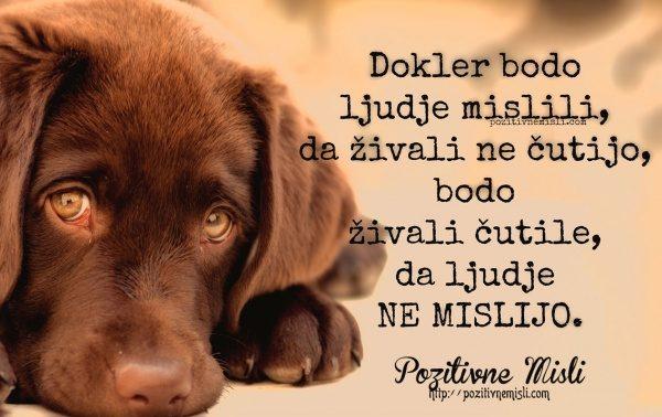 Dokler bodo ljudje mislili, da živali ne čutijo, bodo živali čutile ...