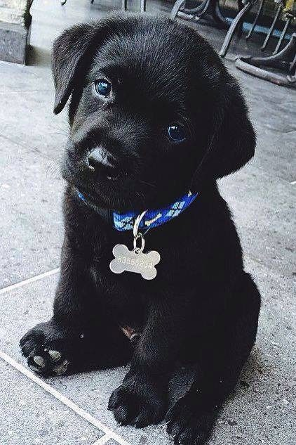 Kuža pes mladiček