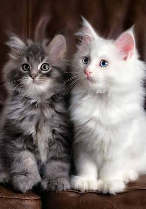 Mačke - lepe misli -1