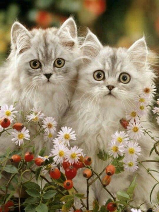 Najlepše misli o mačkah -7