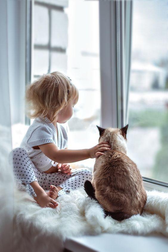 MAČKE - misli in verzi o mačkah