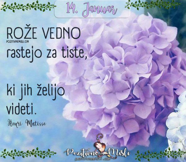 14. januar - Rože vedno rastejo