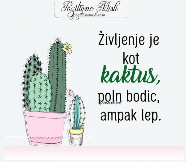 Življenje je kot kaktus