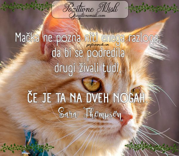 NAJLEPŠE MISLI O MAČKAH -Mačka ne pozna  🐱🐱