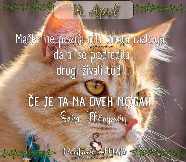 14. APRIL - misel dneva - Mačka ne pozna niti enega