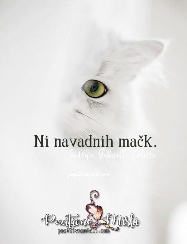 Misli o mačkah - ni navadnih mačk