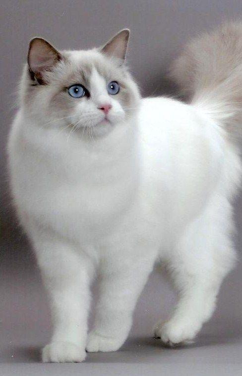 MISLI O MAČKAH - lepe misli o mačkah