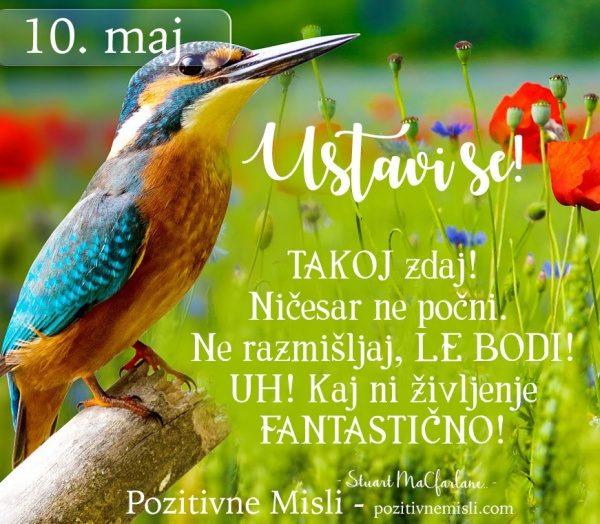 10. maj -  365 modrih misli