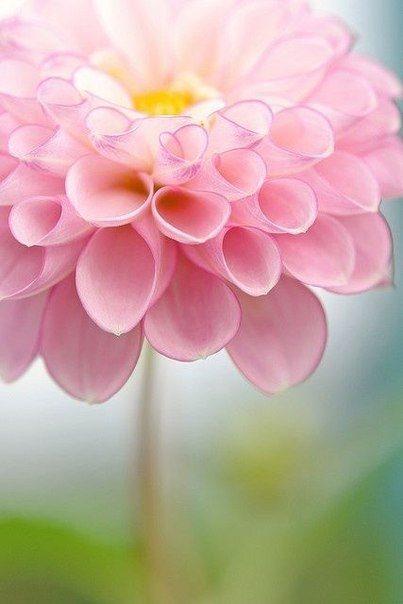 Življenje je kot lep cvet