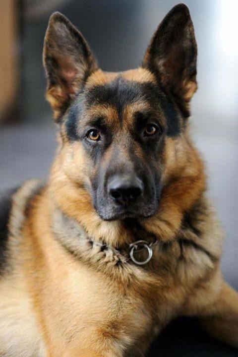 Čudovito je ime psa