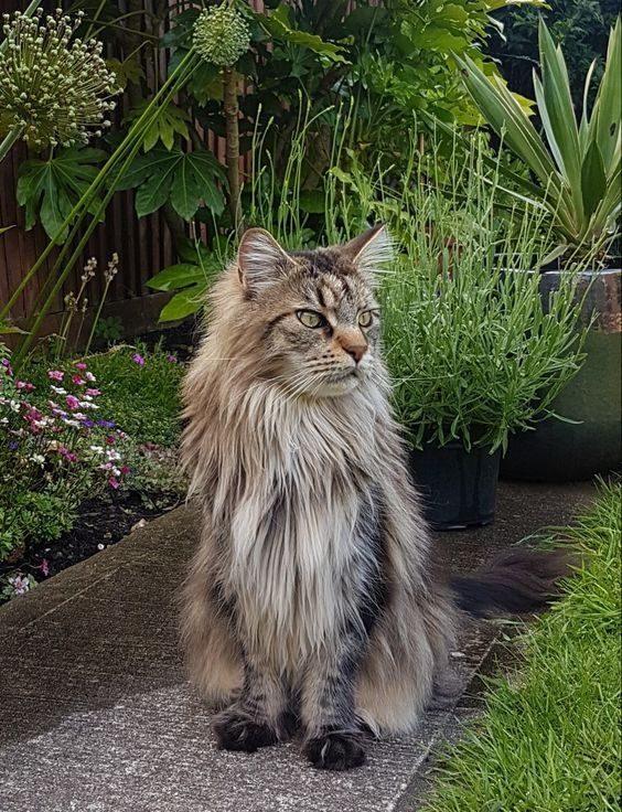 Mačka- misli, verzi, citati o mačkah
