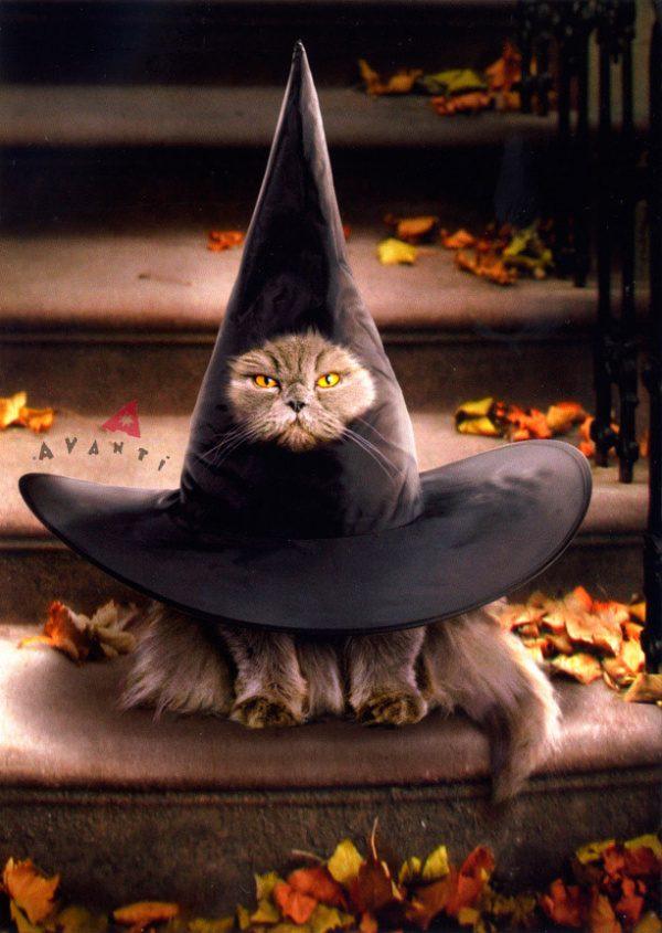 Noč čarovnic  - Čarovnice so nocoj povsod