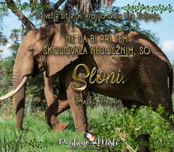 Misli o slonih - Največja bitja, ki krojijo življenja